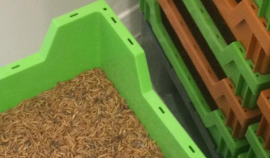 Bacs d'élevage pour insectes